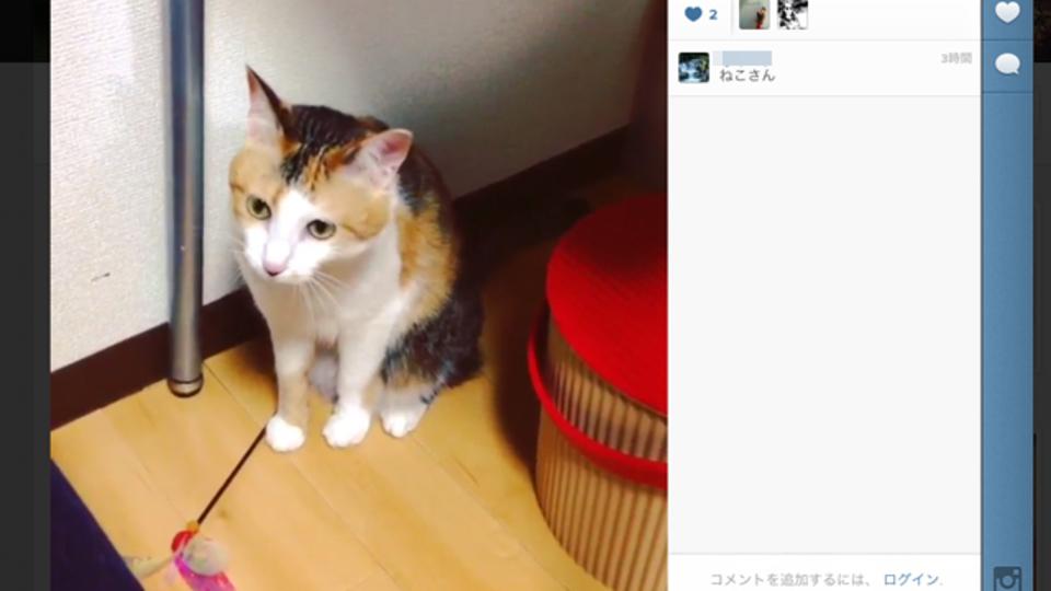 Instagramに投稿した動画をブログなどに「埋め込む」方法