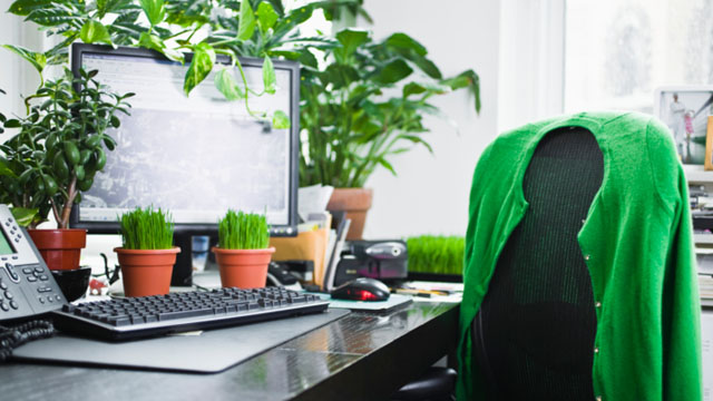 オフィスに緑を