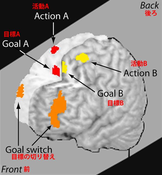 さまざまな活動を処理する複数の領域を、脳が切り替えていること