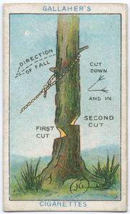決まった方向へ倒れるように木を切る方法