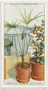 長期間留守にしている間にも、植物に水をやる方法