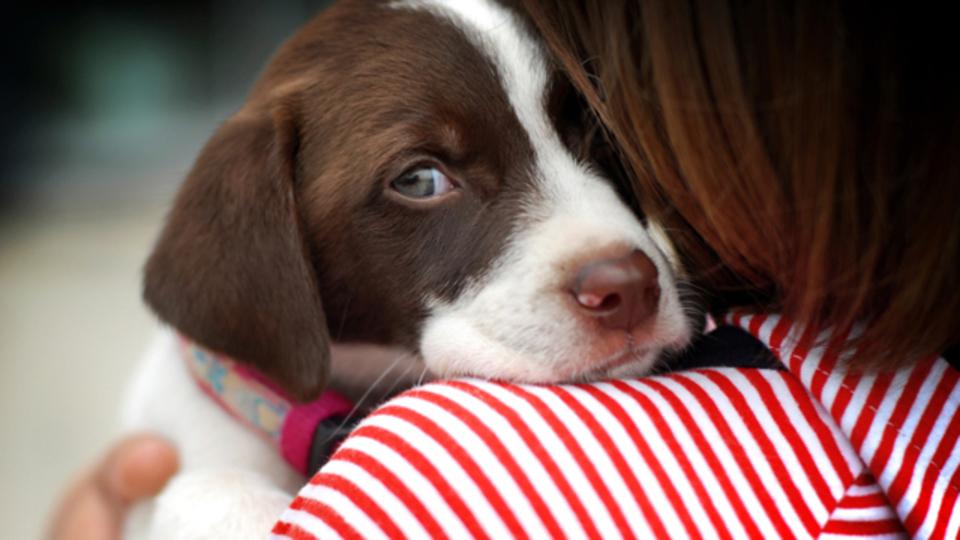 化学の先生が教えてくれた愛犬の異臭をすっきり落とす「洗剤」の作り方