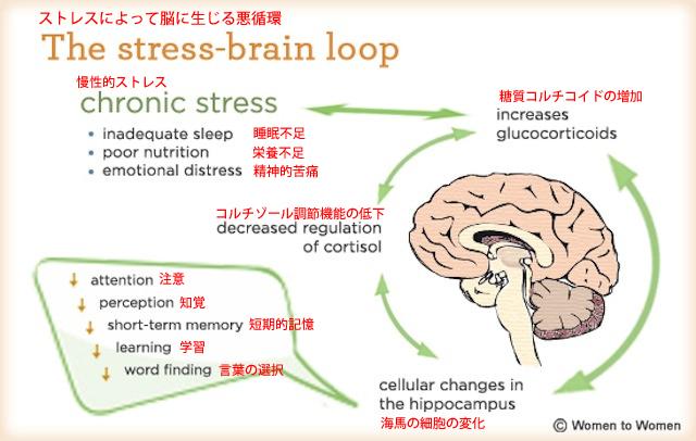 慢性的なストレスによって脳に副作用の悪循環が生じる仕組み