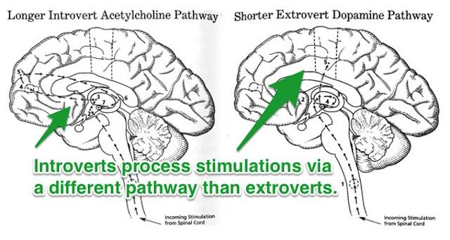 内向的な人の脳内
