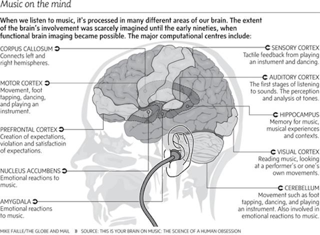 音楽と脳の関係