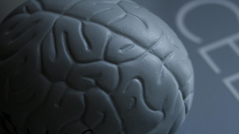 新しいことに挑戦すると記憶力が高まる:研究結果