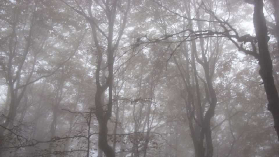 森で迷子になってもサバイバルするために準備しておくべきこと