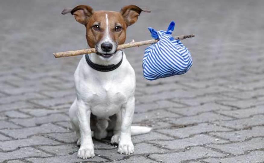 USBメモリが迷い犬探しのお手伝い