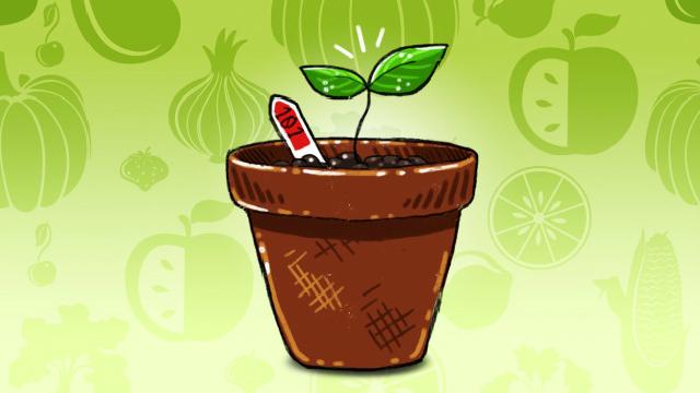 ガーデニング初心者におすすめしたい手軽に栽培できる7つの野菜
