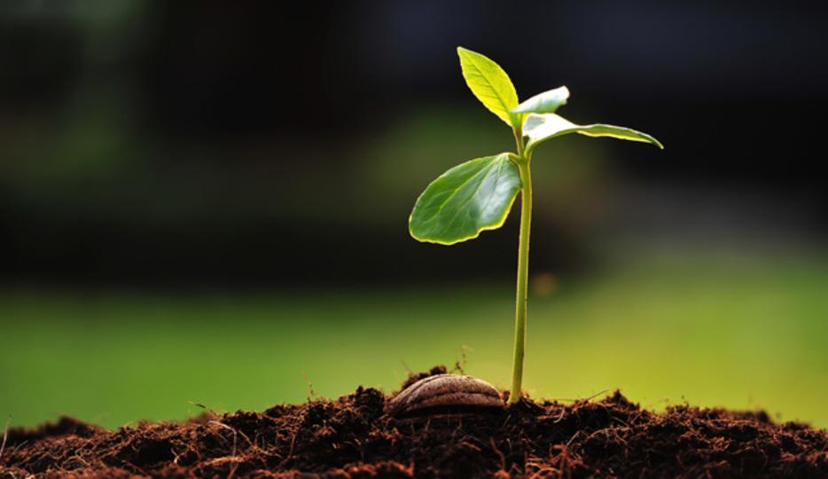 植物に炭酸水をあげると元気に育...