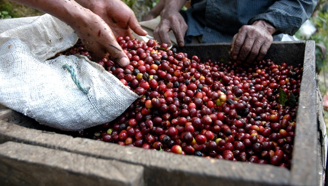 コーヒー豆、シングルオリジンコーヒー