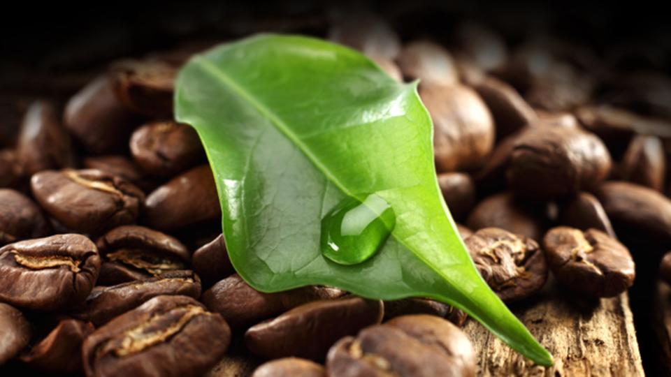 家に侵入したアリを追い払うなら「コーヒーの出し殻」が有効