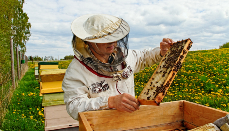 オバマ大統領がミツバチの大量死を予防する特別部隊を編成へ