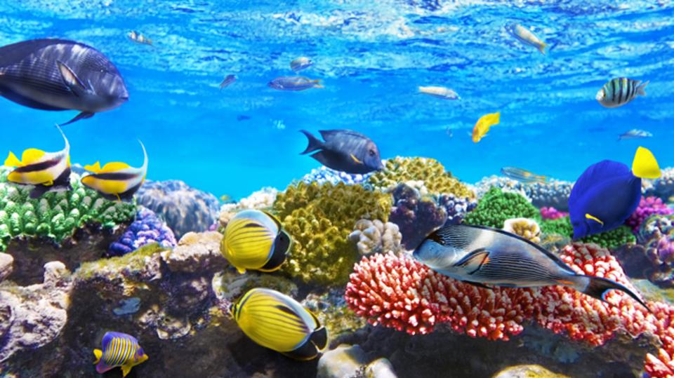 魚には高度な知能がある?道具の使用や、社会的学習の兆候から科学者が主張