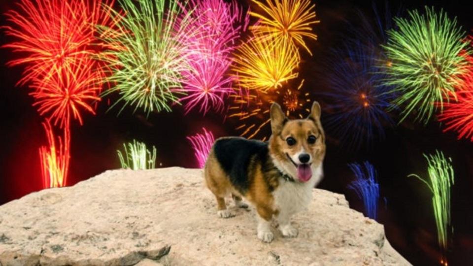 花火を怖がる犬のために飼い主ができること