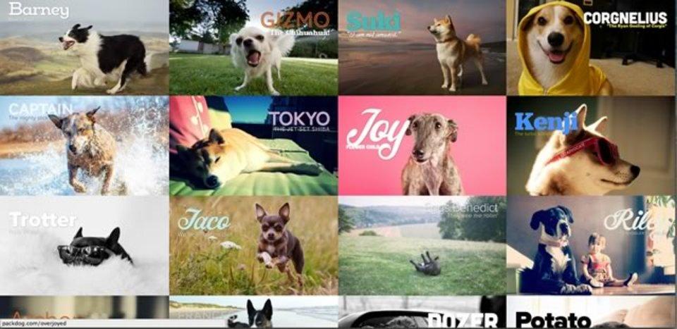 集まれ、犬好き! 飼い犬のプロフィールページが作成できるサイト「Pack」