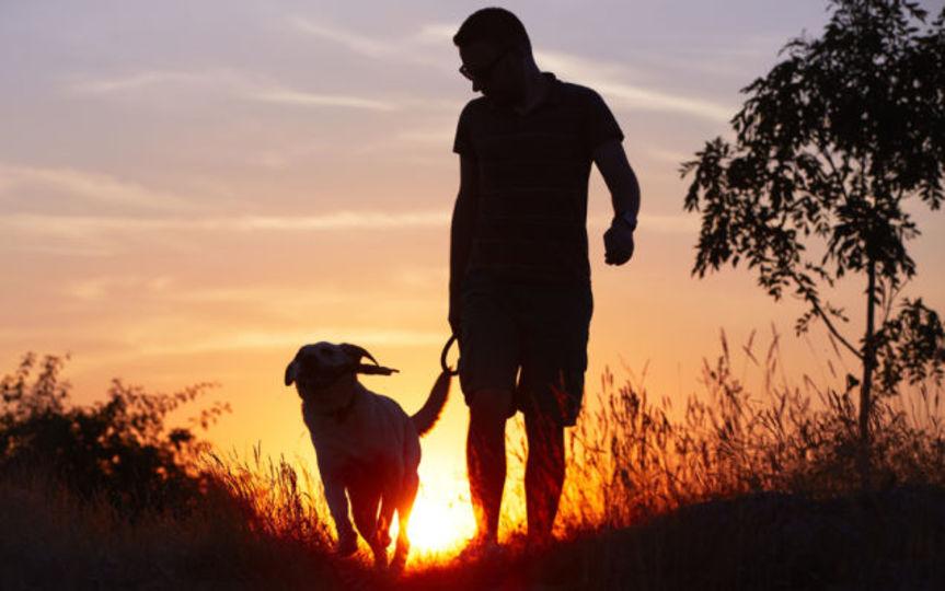 愛するペットの安楽死と向き合う方法