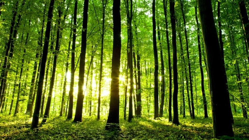 森に行くだけでストレスホルモンは減少する:研究結果