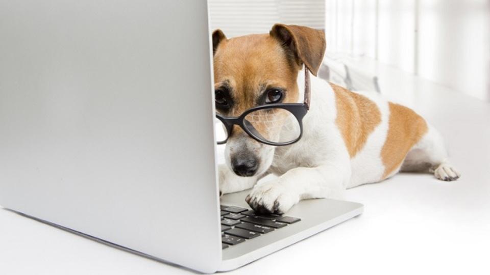 犬がいるだけで職場がより良くなる、これだけの理由