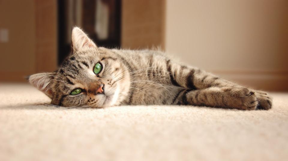 猫はあなたを愛していない?猫研究家が「猫嫌い」の主張に科学で反論