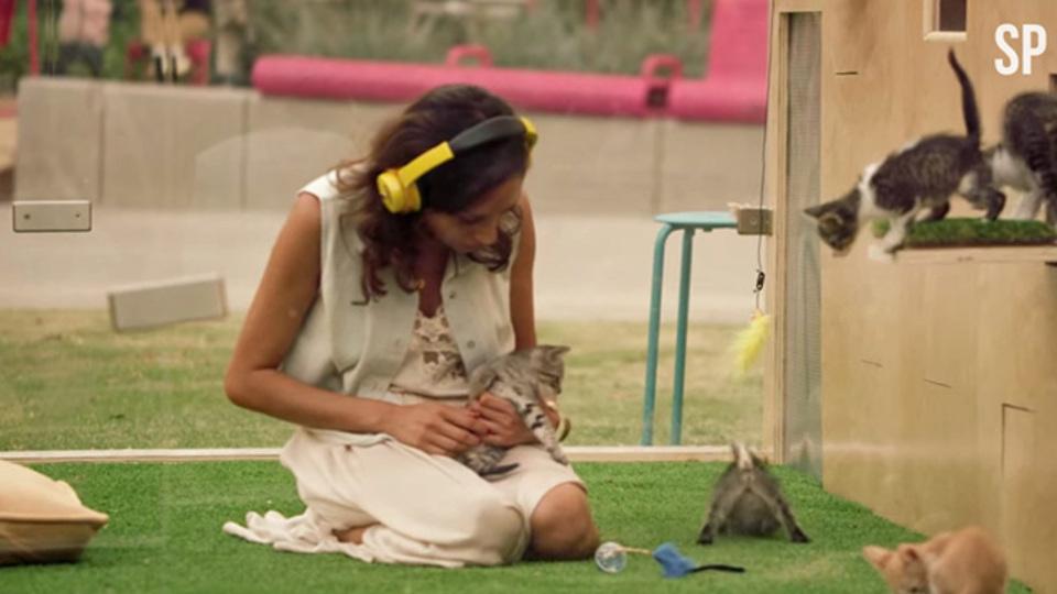 ストレスが減る動画:瞑想してたら子猫祭り開催