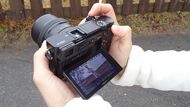 141212sheep_photo_12.jpg