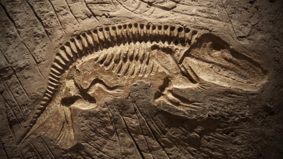 人工DNAデータの保存寿命が数百万年に