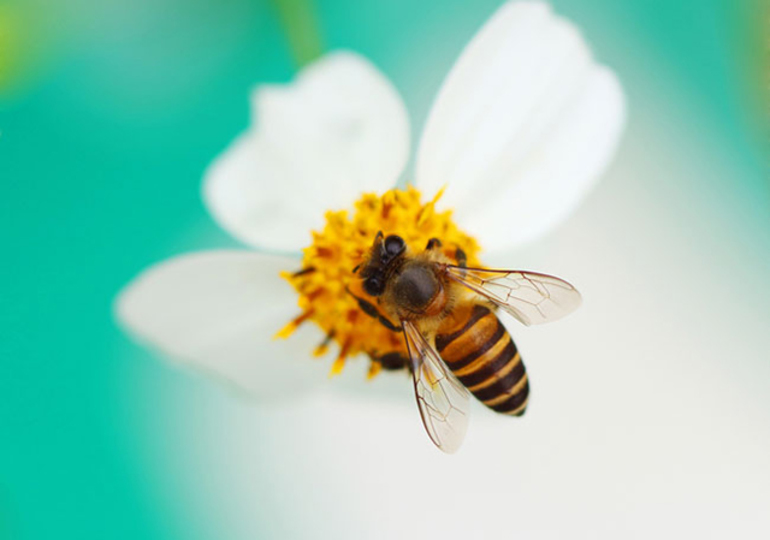 薬を使わず花粉症の症状を軽減、アメリカで流行の意外な健康法