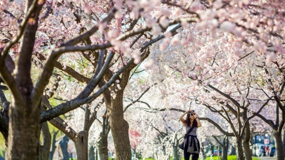 桜だけが花見じゃない!世界で見つけた5つの「絶景お花見スポット」