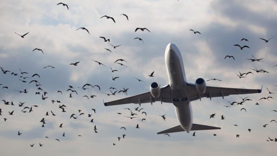 ドローンが飛行機に衝突するリスクは、鳥が飛行機に衝突するリスクより小さい
