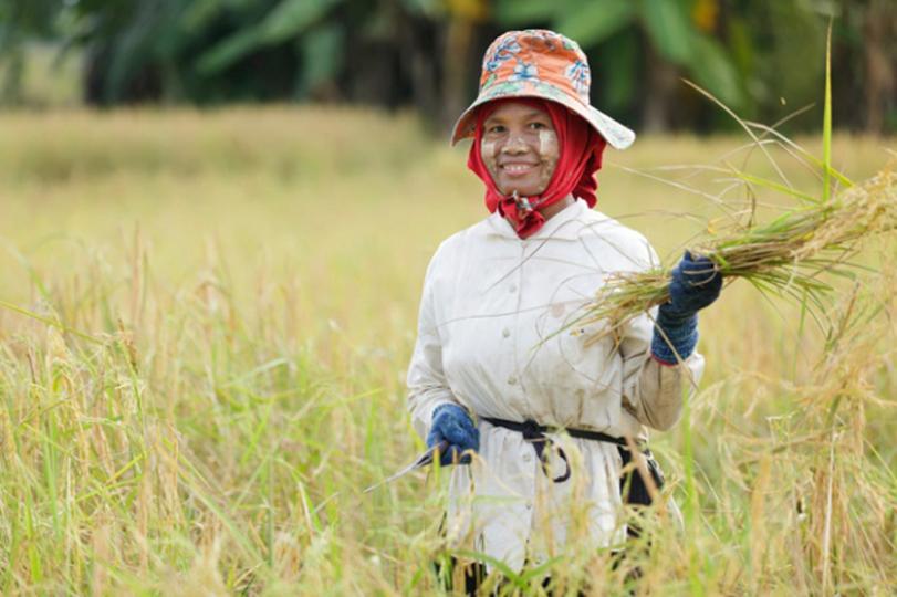 お米の消費量、日本は世界50位だった