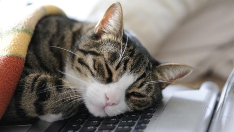 日本政府が公式資料を作ってまで「ゴゴイチの昼寝」を推奨する理由