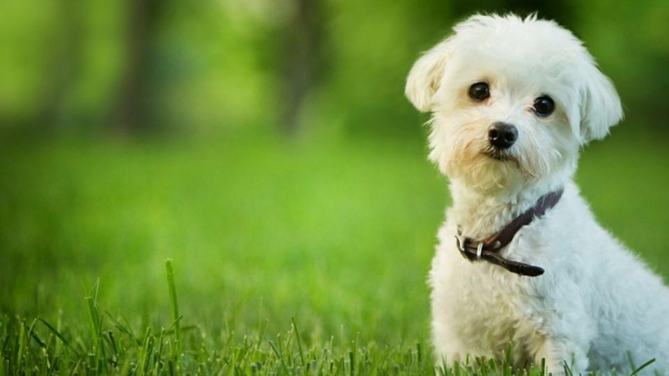 犬を飼う前に知っておいてほしいこと