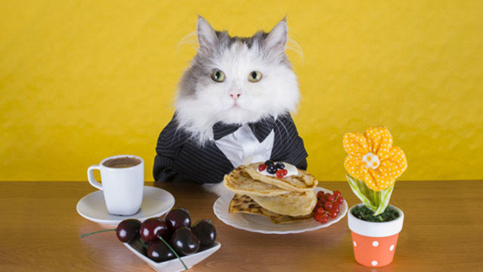 猫の偏食を科学が解明