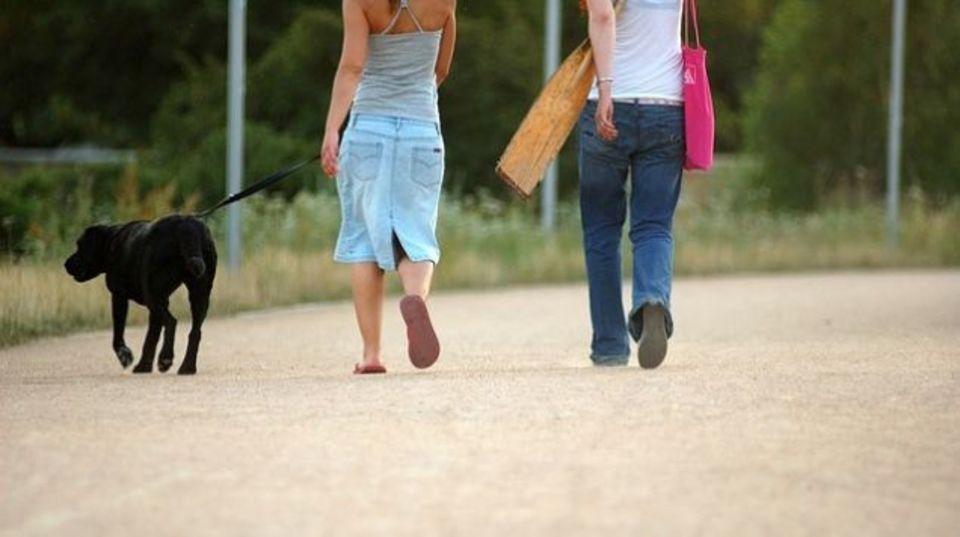 犬の散歩に暑すぎるかどうか、5秒で判断する方法