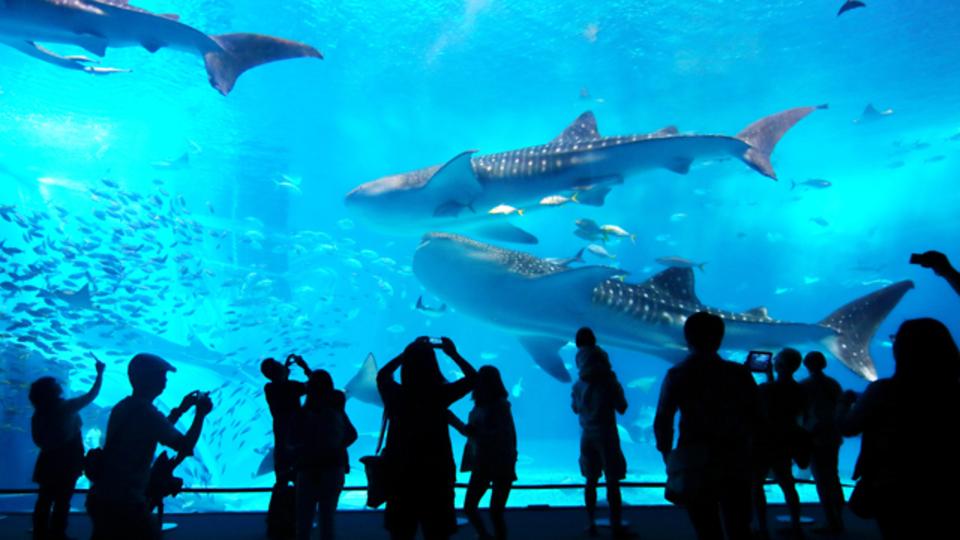 東京、大阪など全国の新しい水族館。2015年オープン・リニューアルの7選ほか〜木曜のライフハック記事まとめ