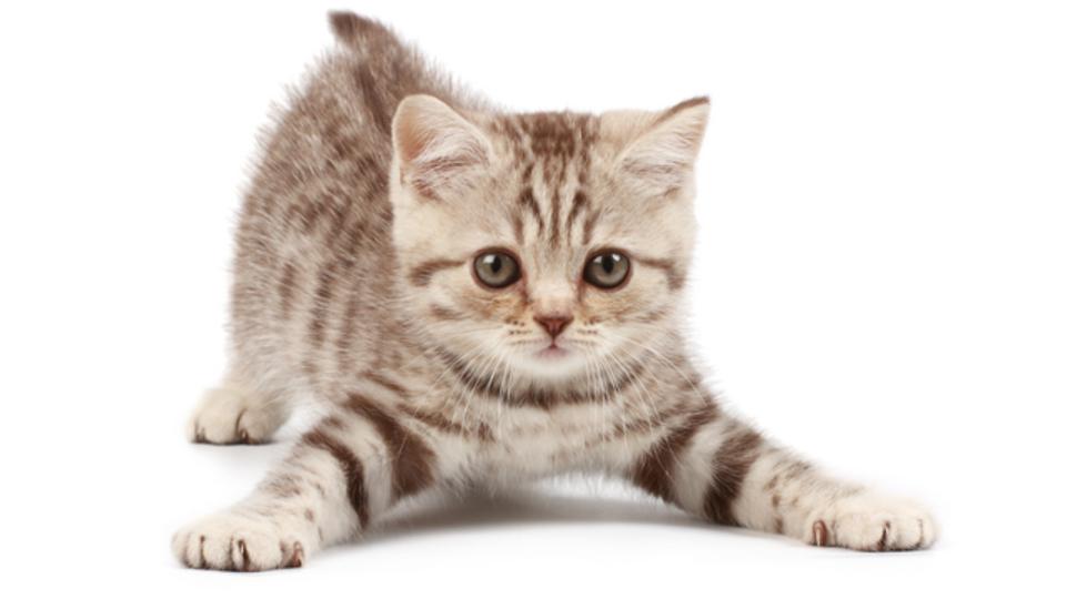 猫は犬より「苦み」に敏感なことが判明