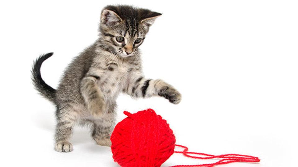 ネコがものをひっくり返す理由(と、その防ぎ方)