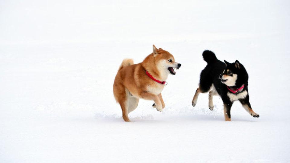 人間も動物も雪が降るとはしゃいでしまうのはなぜなのか?(動画あり)