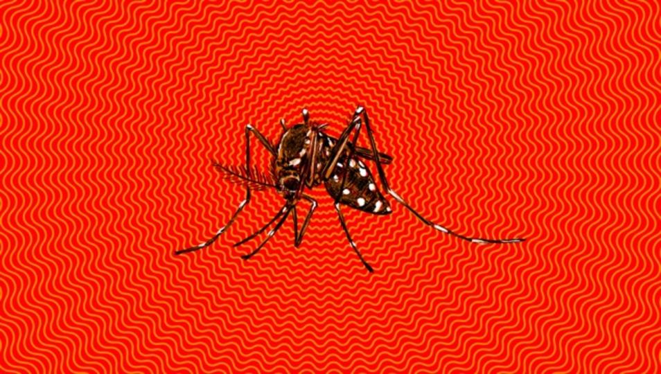 「ジカ熱」に的確に対応するために知っておくべきこと