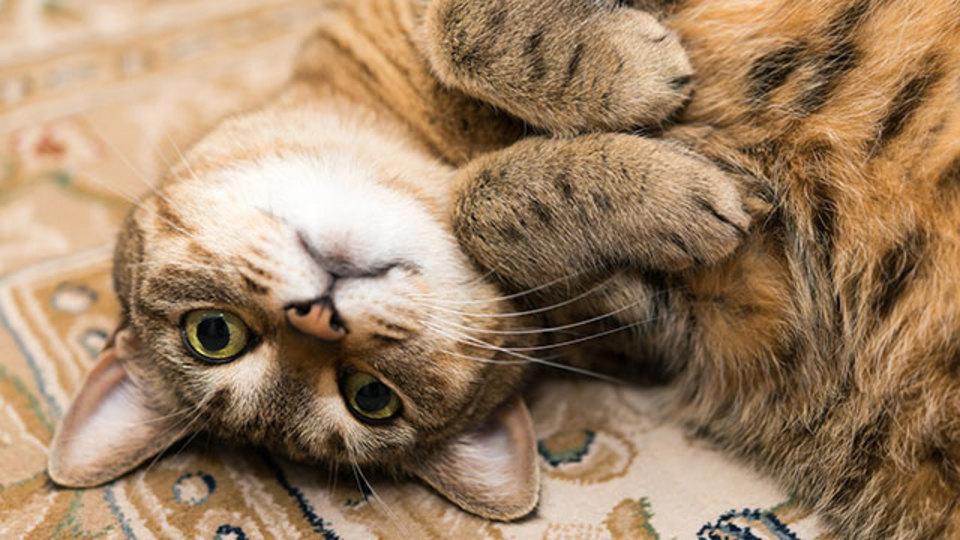 猫飼いなら考えておきたい防災対策