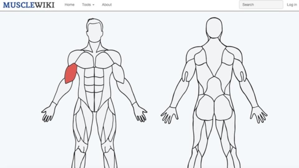 特定の筋肉のためのエクササイズを教えてくれる「MuscleWiki」