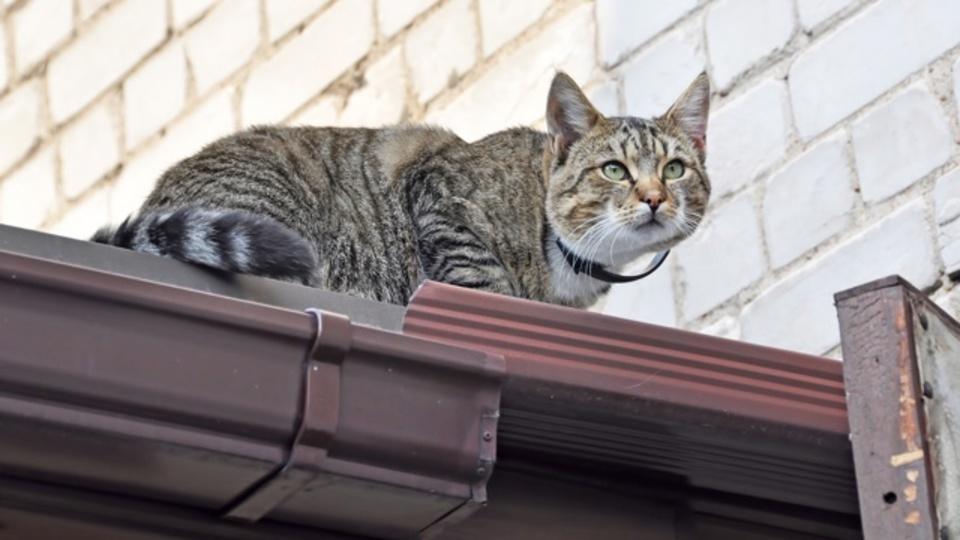 高い場所から落ちても、ネコが必ず足から着地できる理由