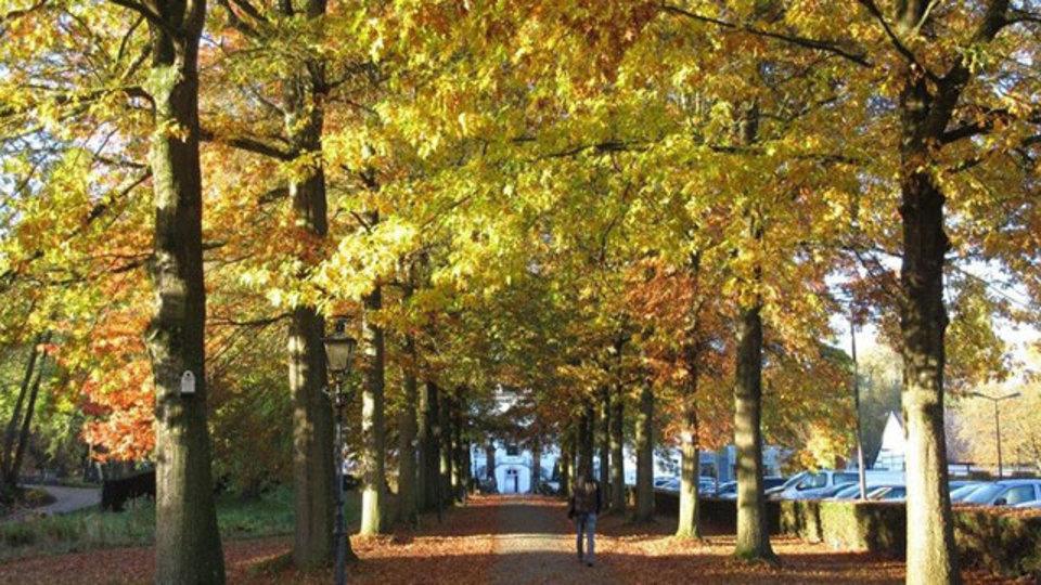 ドイツ、オランダ、ベルギーの3カ国をまたぐ森を知っていますか?