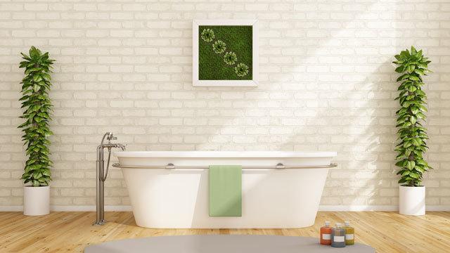 バスルームにもぴったりな観葉植物