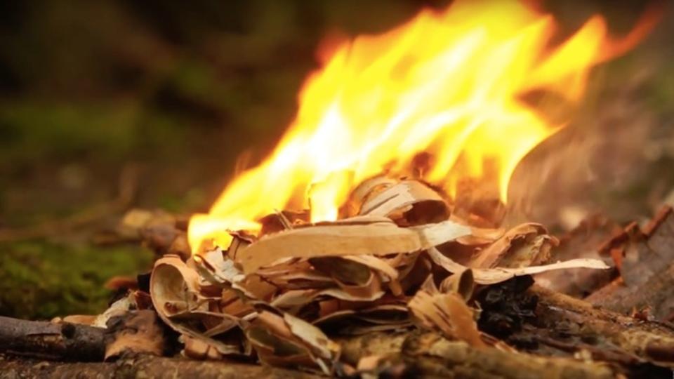 森で探そう!たき火に使える植物ベスト10と、その使い方