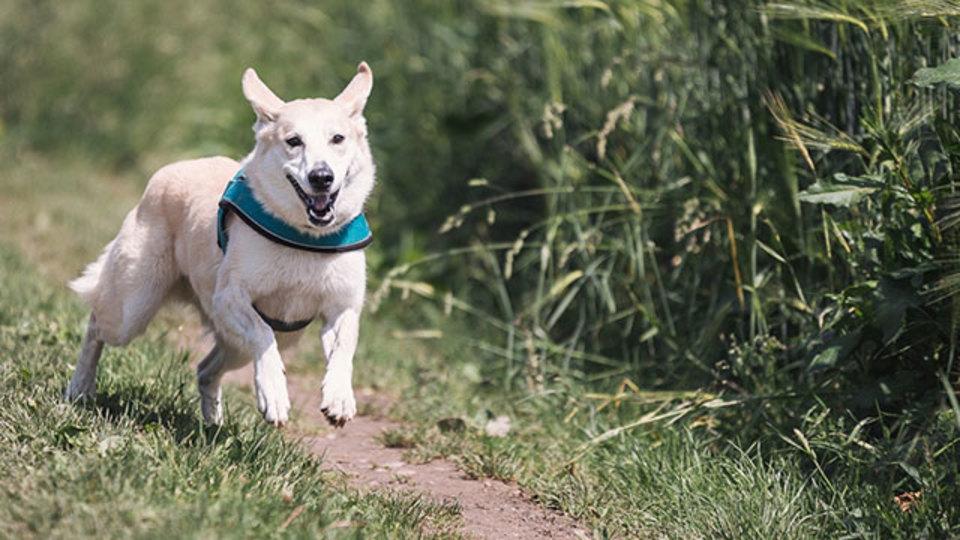犬種を問わないベストな首輪/避けるべき首輪とは?