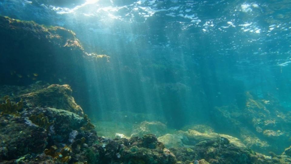 2030年までに海中の酸素レベルが著しく減ってしまう可能性