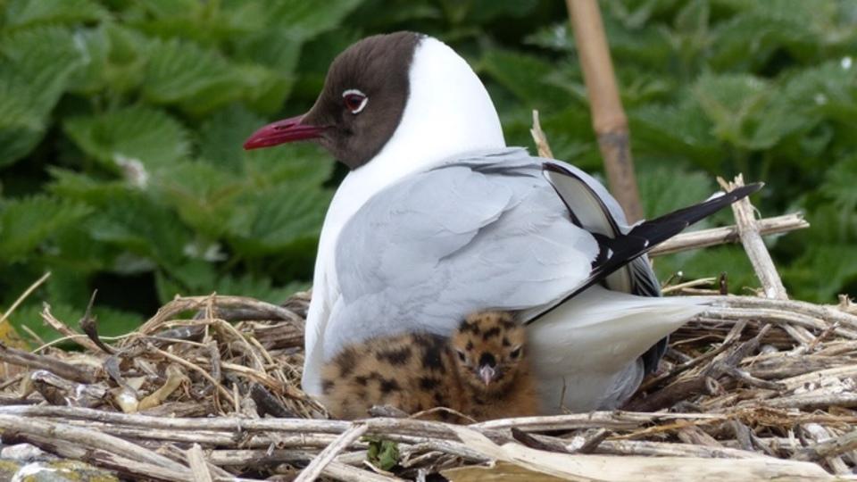 赤ちゃん言葉は脳を活発にする? 親鳥から鳴き方を学ぶひな鳥は、さえずり上手なことが発覚!