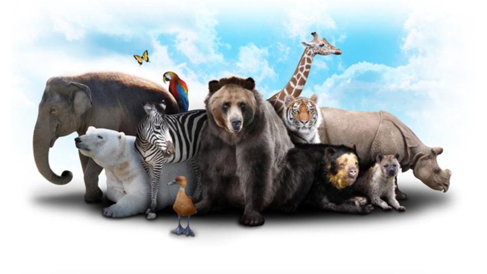 ゾウが絶滅危機? 野生生物のエキスパートたちが立ち上がった